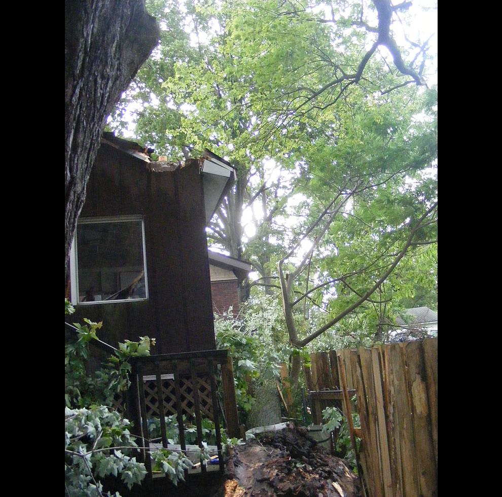 Part of huge tree slams into two houses