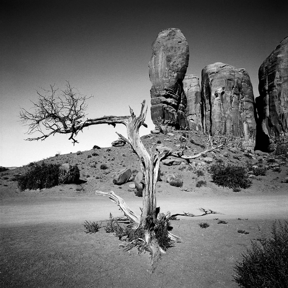 Tree taken in front of The Thumb at Monument Valley