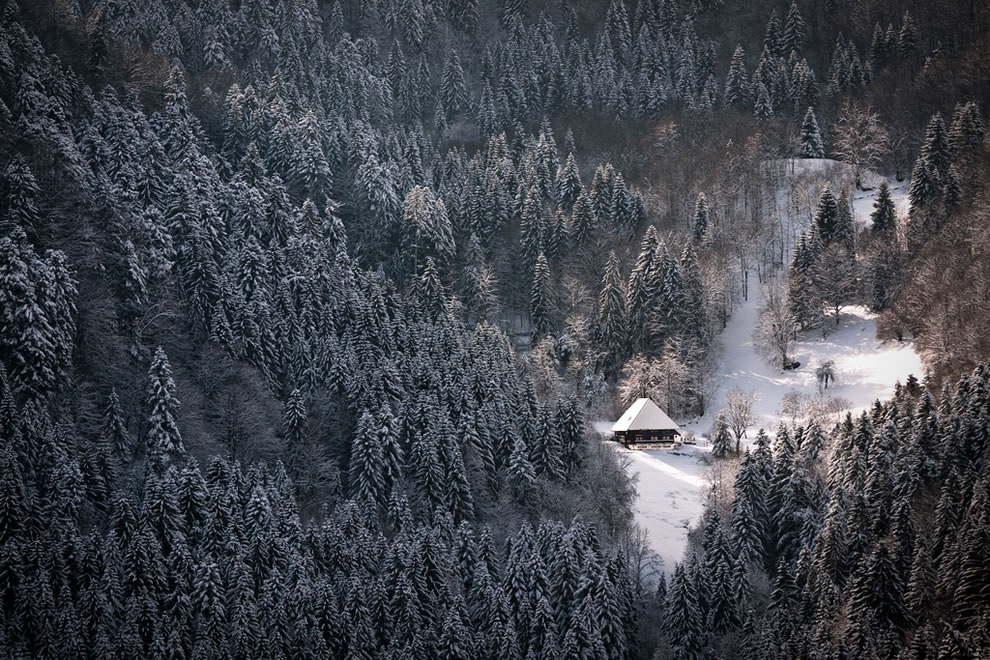 Deep in the Black Forest