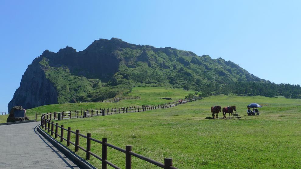 Path + Horses Jeju Island
