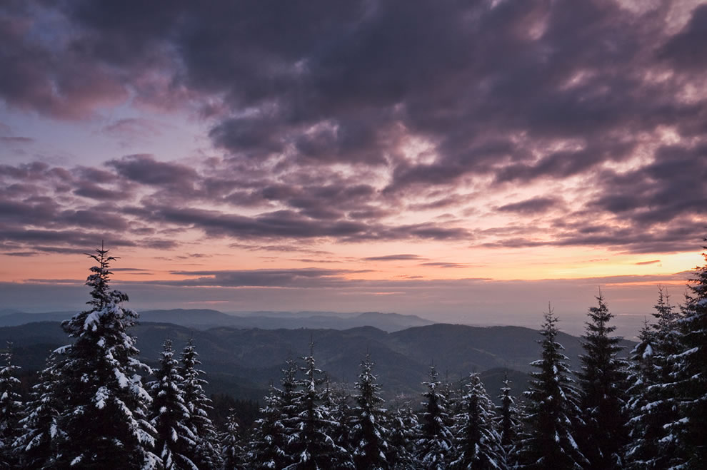 Schwarzwald Colder Nights