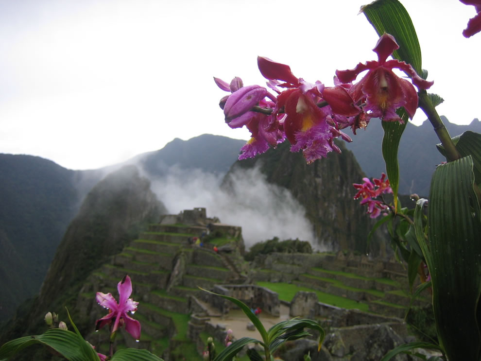 Machu Picchu is surrounded by these beautiful pink orchids