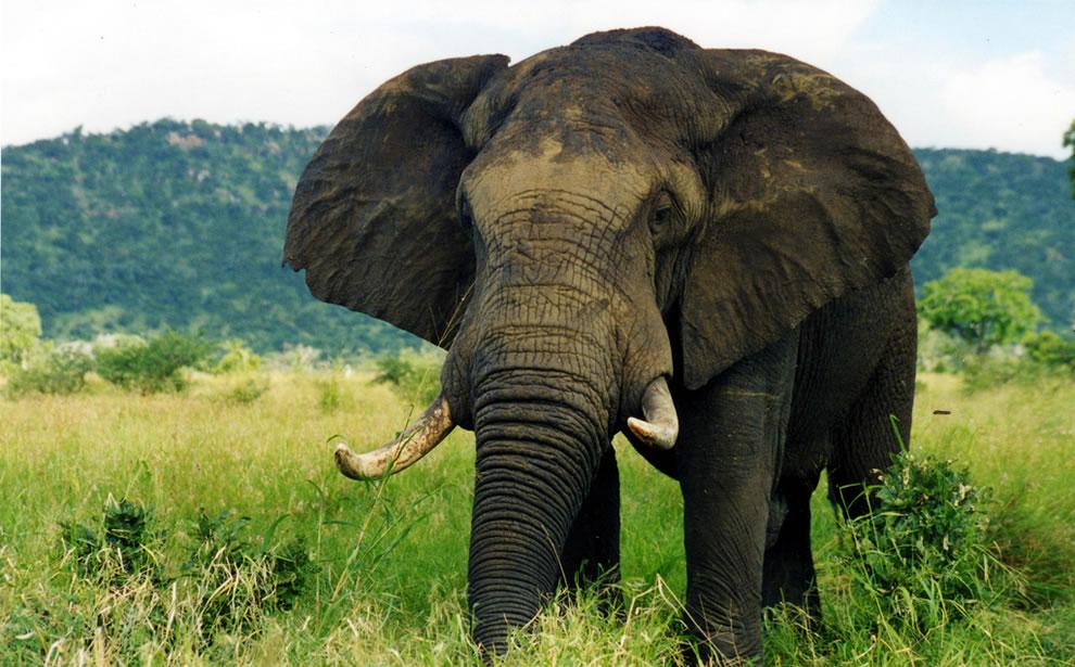 South African Safari - Elephant