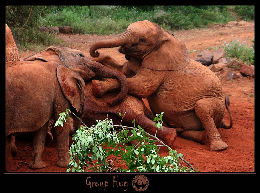 Taken at sheldrick, elephant orphanage in Nairobi