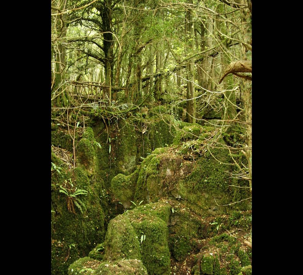 Enchanted woods puzzlewood