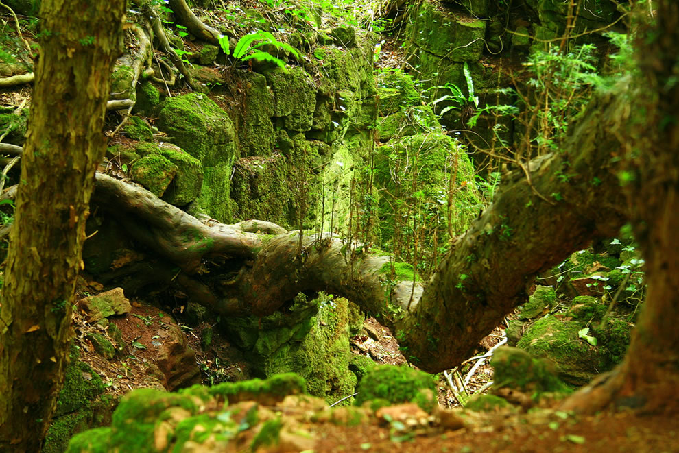 Glorious Green of Puzzlewood