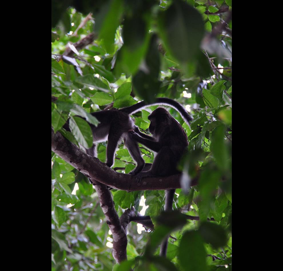 Monkey see, monkey do along Monkey Trail