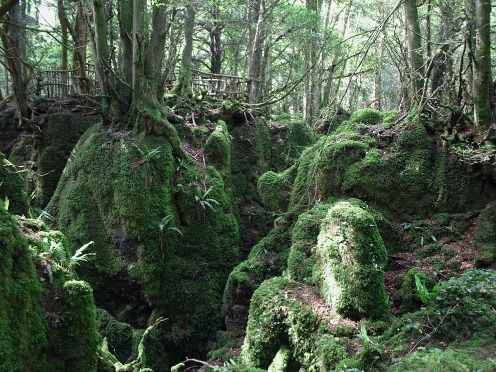 Mossy Puzzlewood
