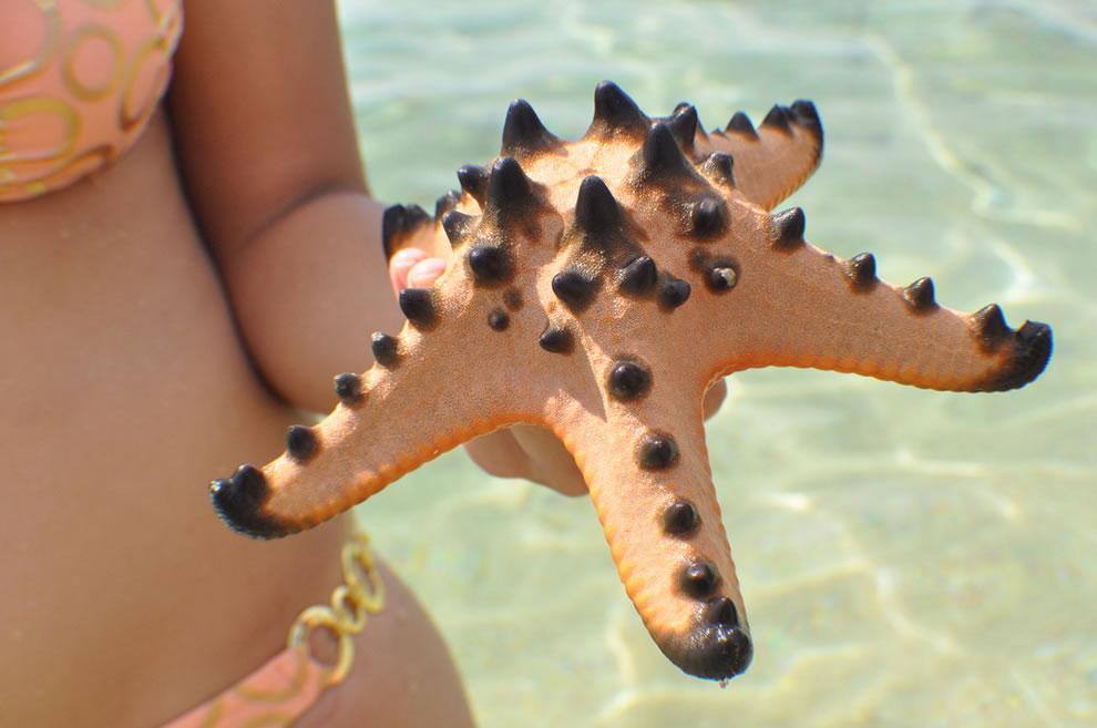 Palawan Starfish