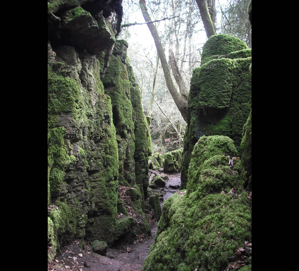 Puzzlewood Middle Earth