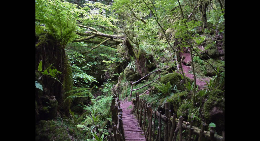 Puzzlewood traversing Middle Earth