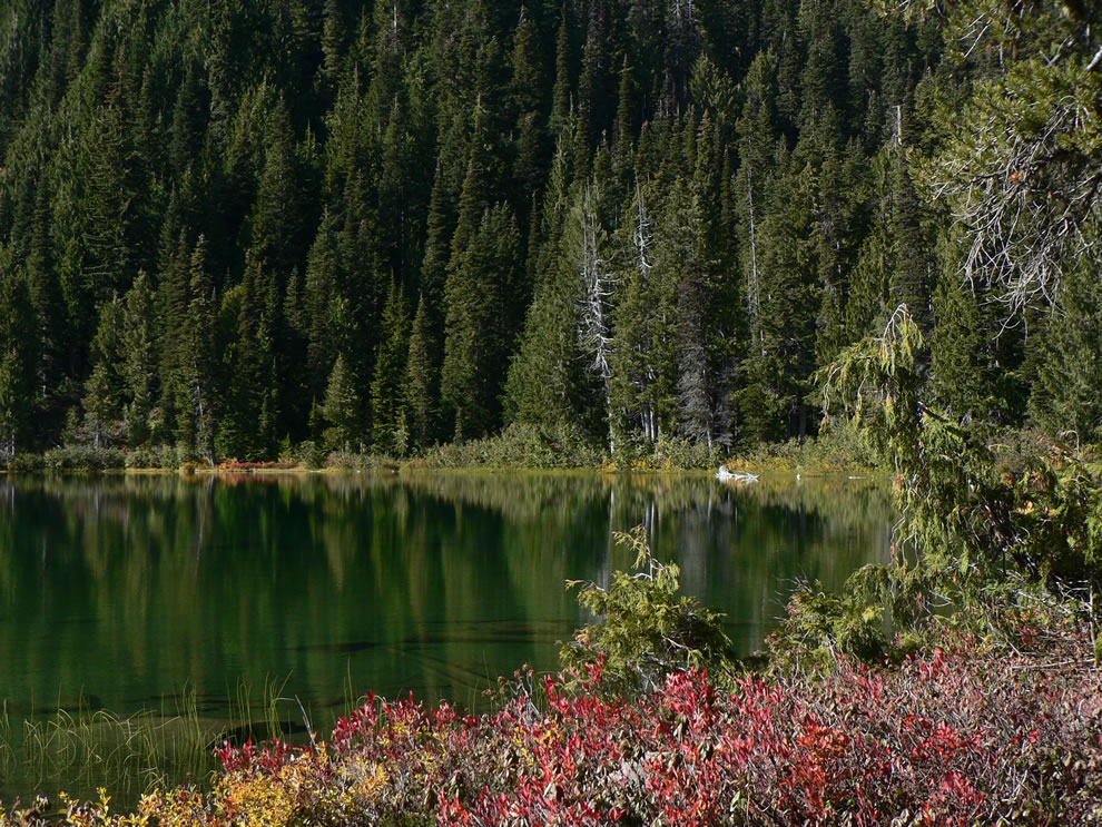 Squaw Lake (4841 feet); Huckleberry and Yellow Cedar