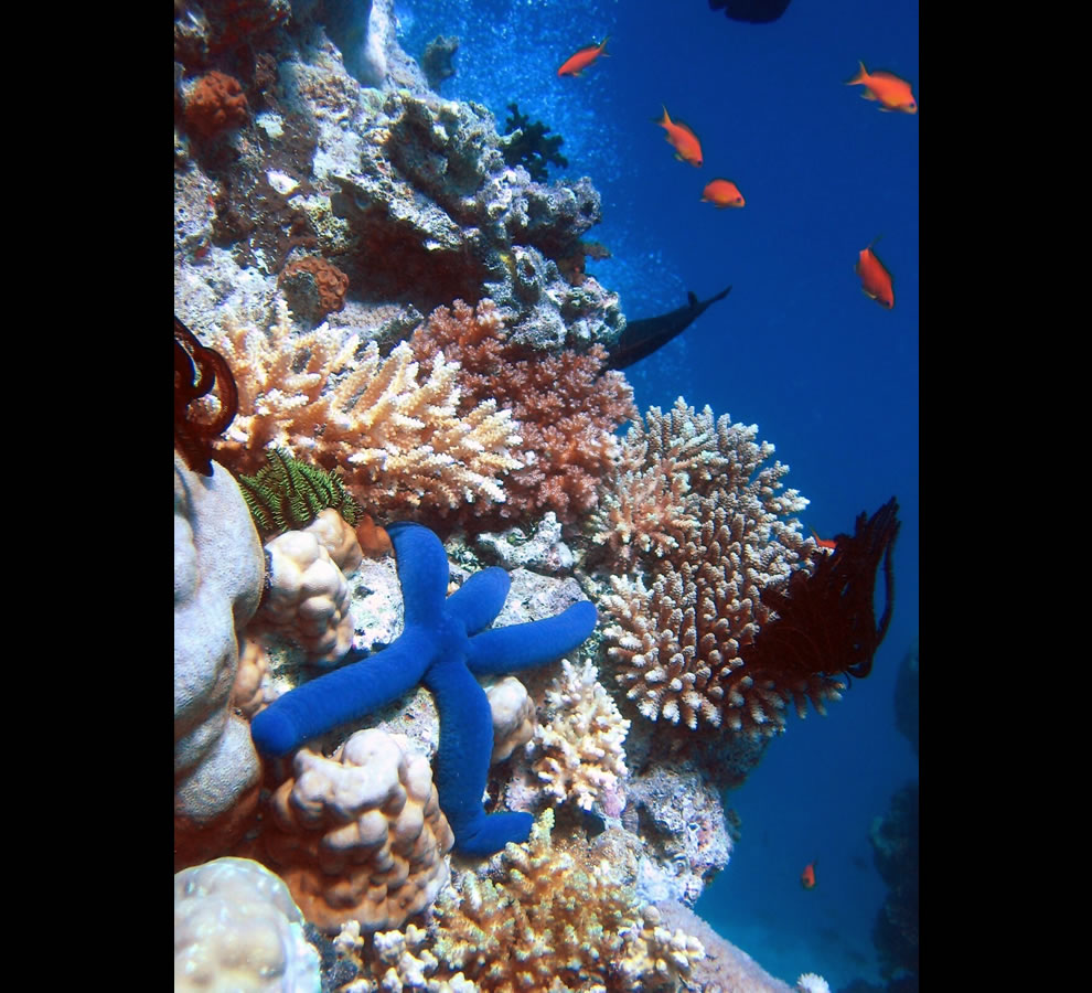 Stretching more than 2,000 km -1,200 miles - along the Queensland coast, the Great Barrier Reef