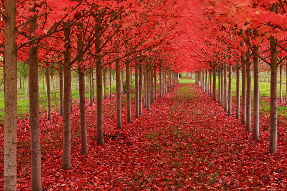 Under A Blood Red Sky, fall leaves in St. Louis, Oregon