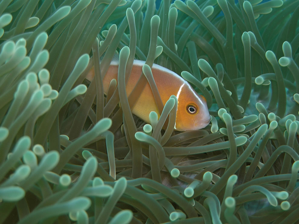 You Can Help Conserve Coral Reefs