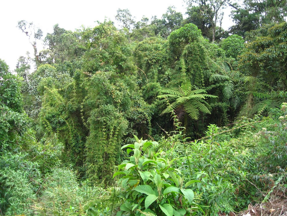 bamboo and ferns in amazon rainforest