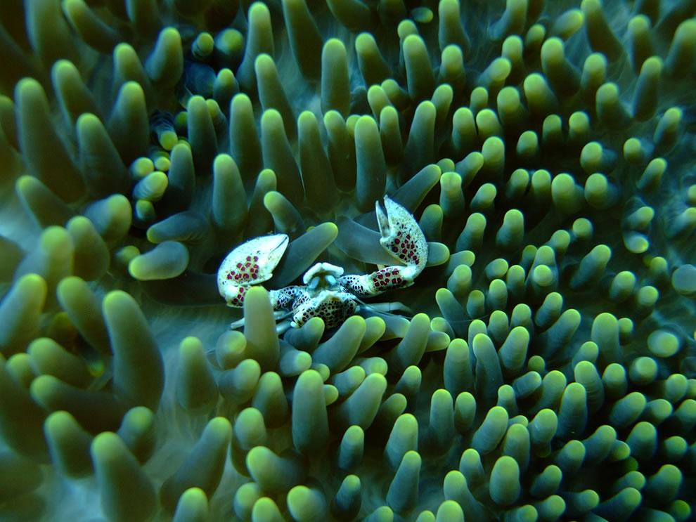Underwater creature at Komodo National Park