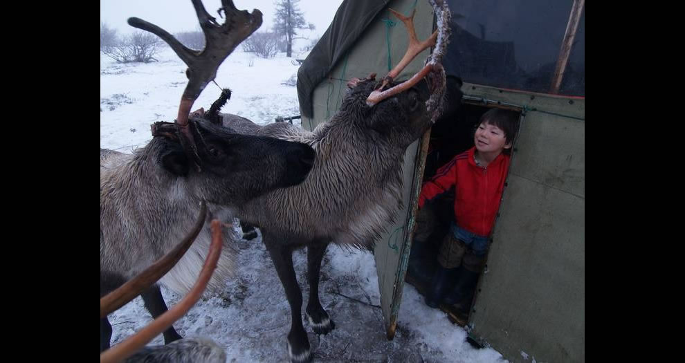Nenets people are indigenous people in Russia that live in the Arctic region. Think of what it would be like to open your door to spy a reindeer in the morning
