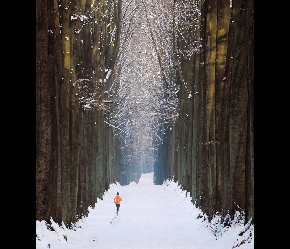 """Forêt de Soignes"""", close to Brussels, Belgium, on a snowy afternoon Post Apocalypse Running in the Cathedral"""
