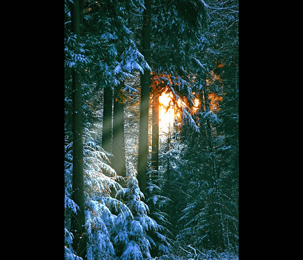 Sonian Forest close to Brussels -- 'Comfortably nestled in the Forest Snow'