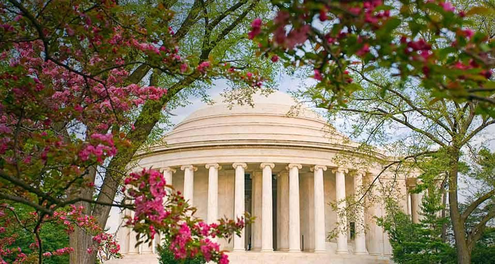Cherry blossoms frame the Jefferson Memorial in Washington, DC