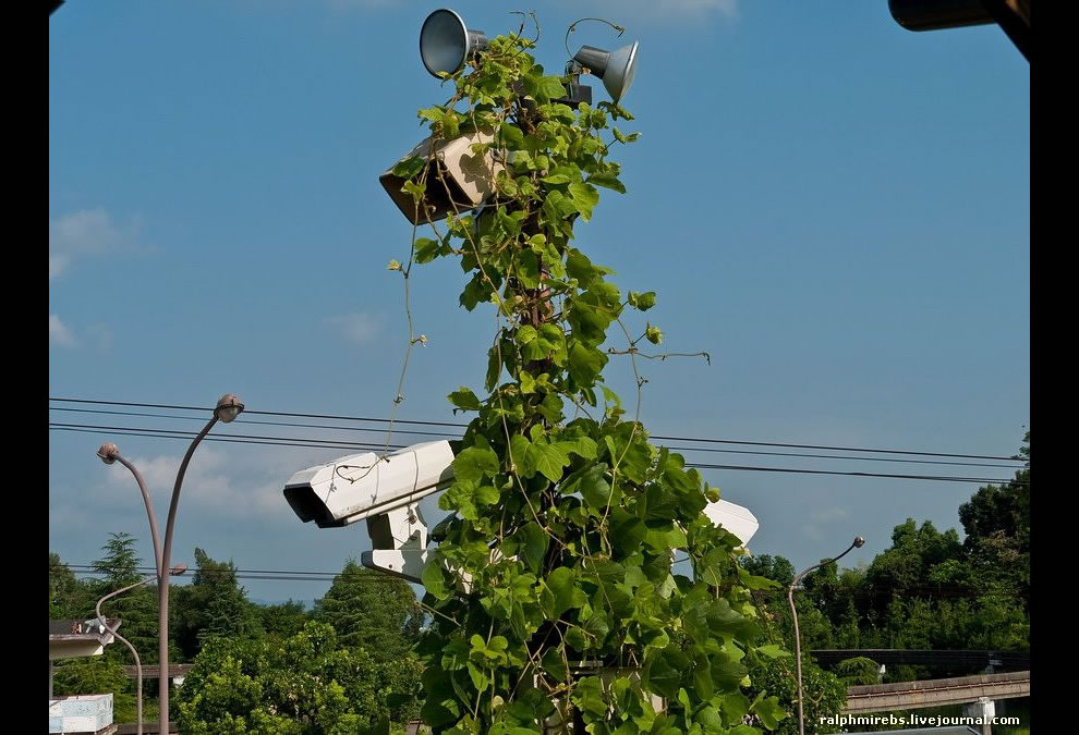 nature reclaims surveillance cameras of abandoned Nara Dreamland August 2011