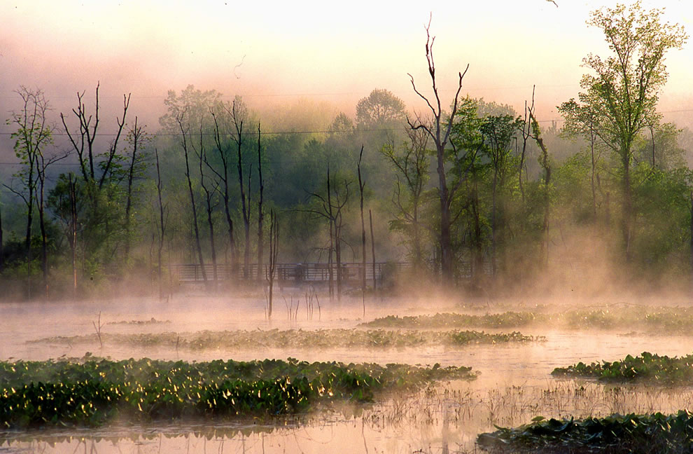 Beaver Marsh in morning mist -- Cuyahoga Valley National Park