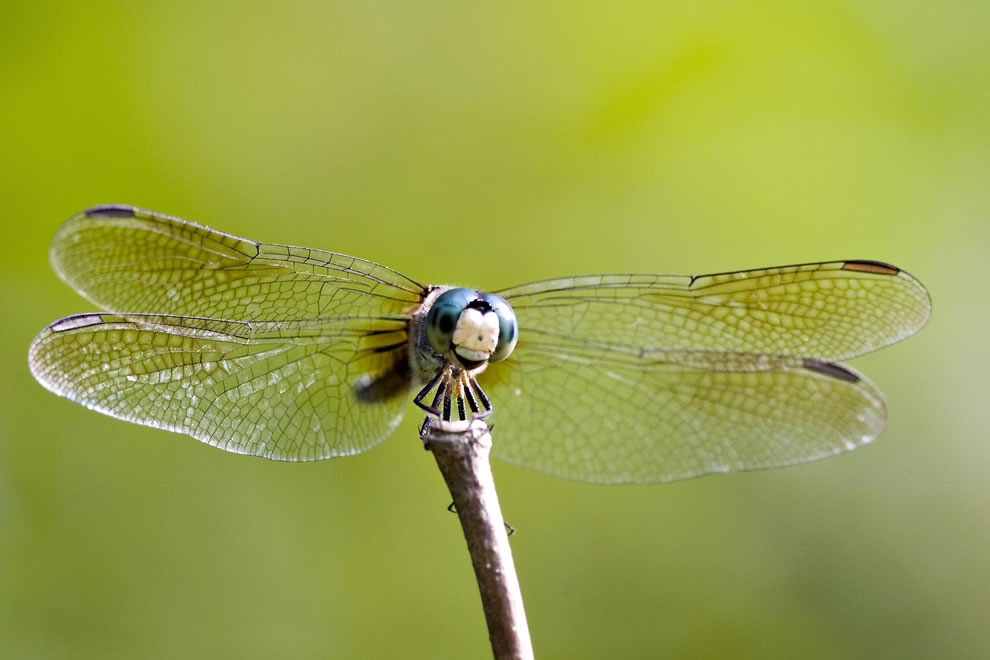 Dragonfly in Cuyahoga Valley National Park