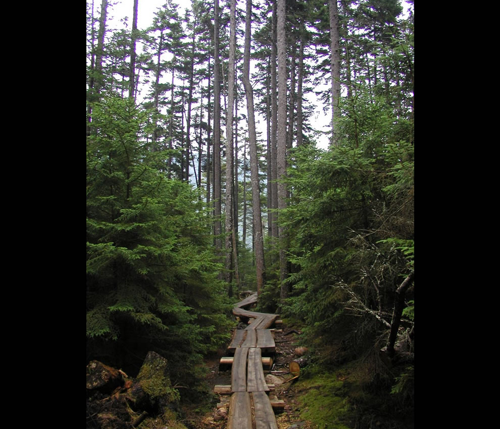 Jordan Pond Boardwalk for hikers and nature lovers at Acadia