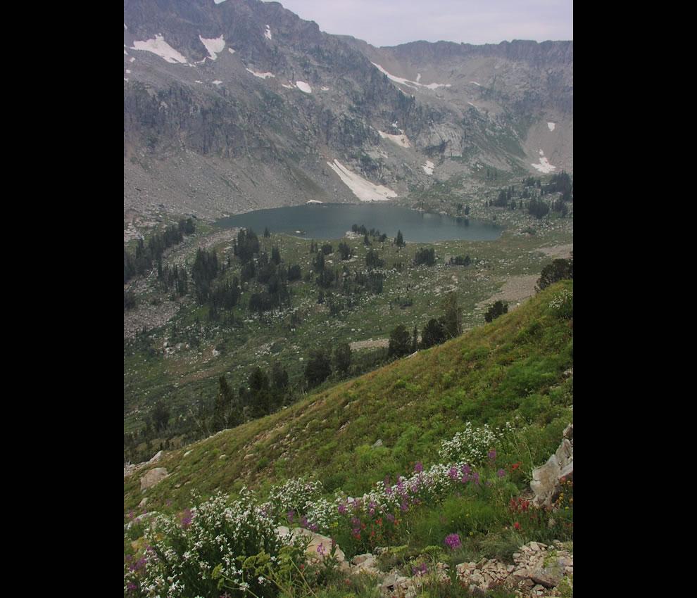 Looking down on Lake Solitude wildflowers