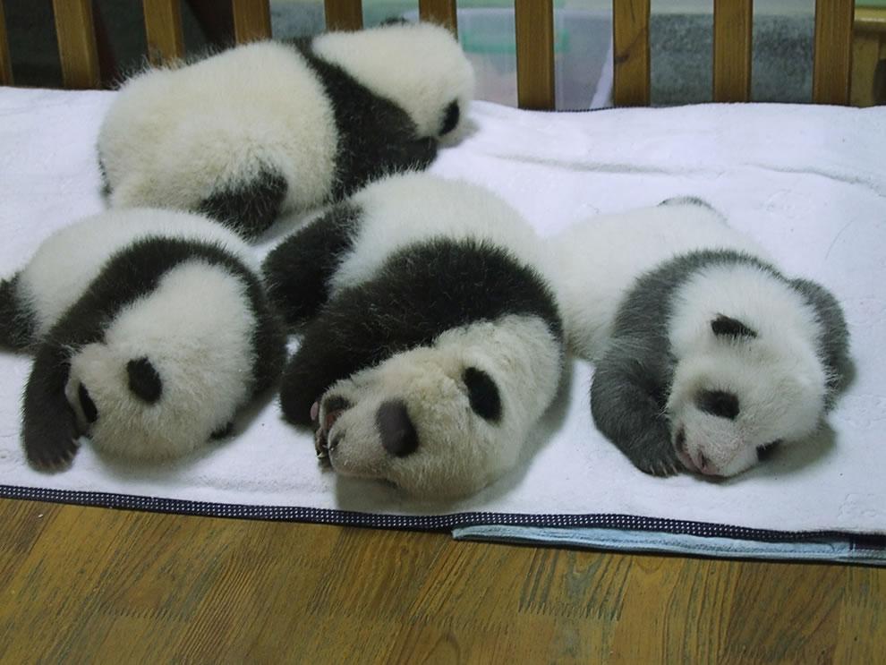 Taken at Sichuan Giant Panda Sanctuary, China