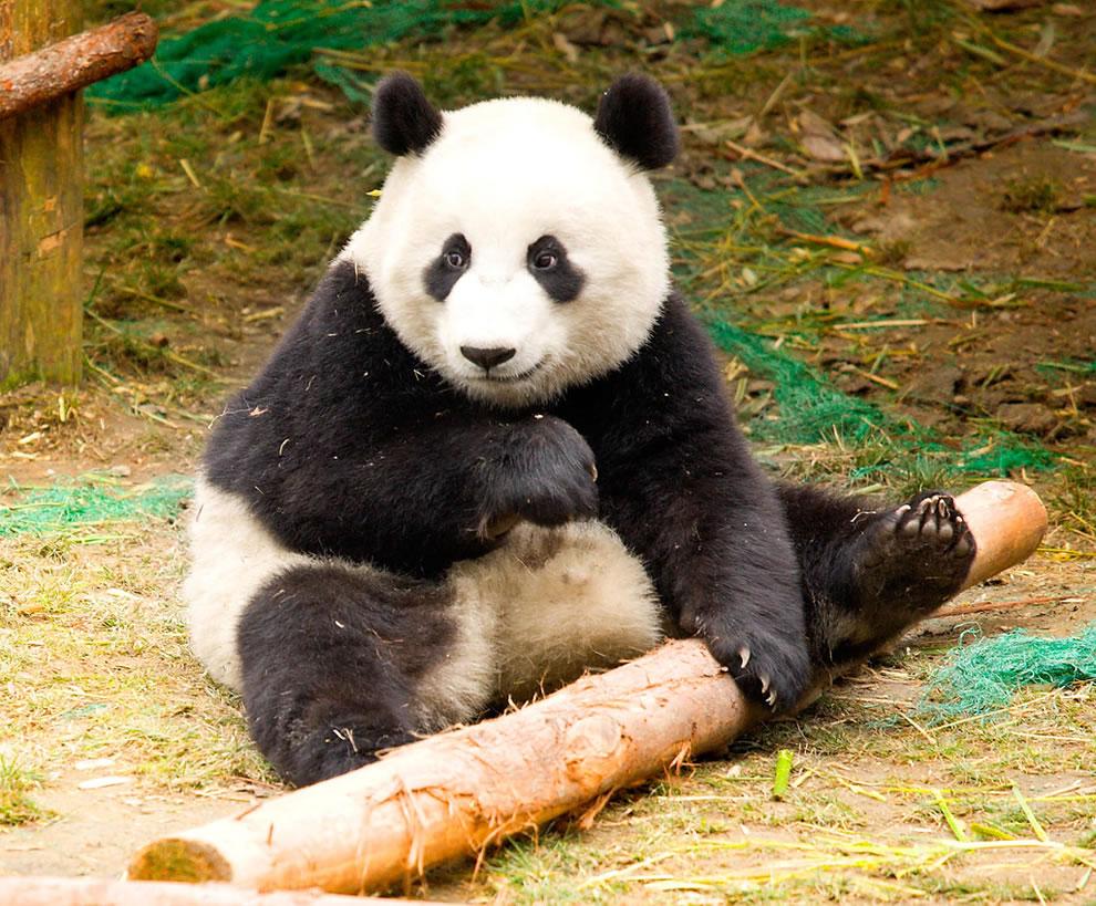 Wolong, China, Panda preserve -- World Heritage Site
