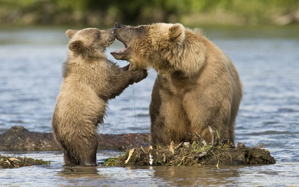 Momma bear teaching baby bear about first bath