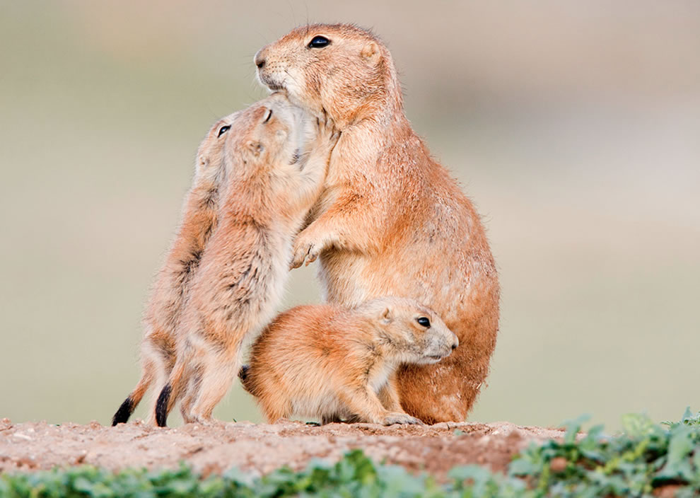 A Mother's Love: 40 Adorable Animal Mom and Baby Photos