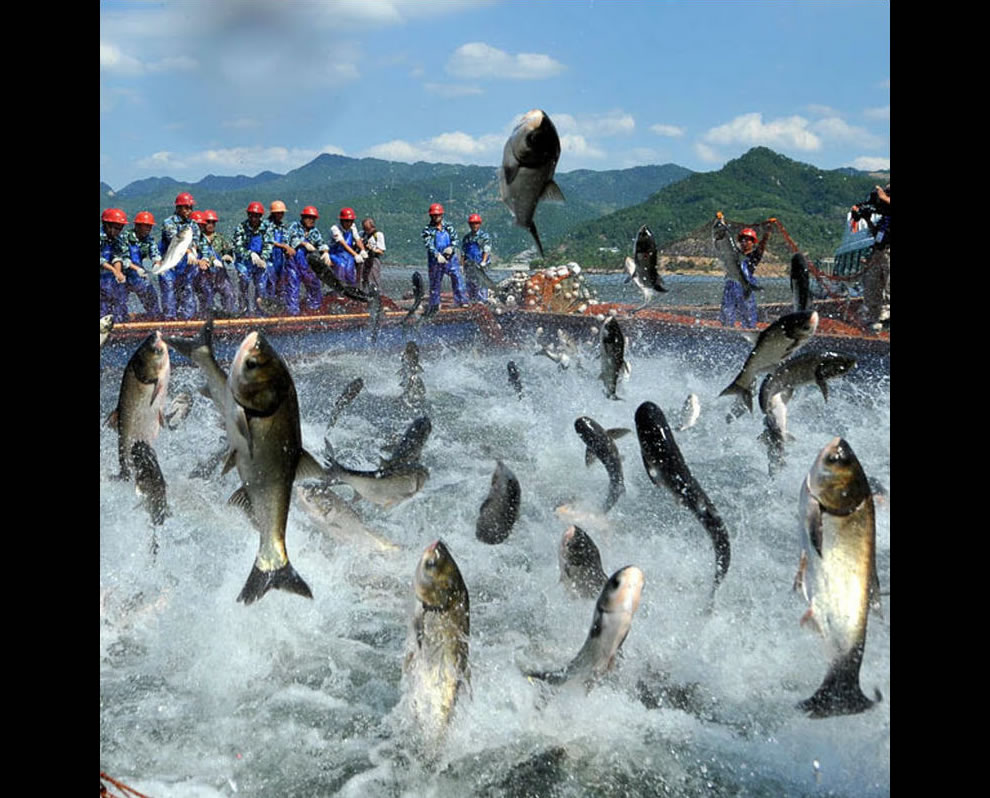 Carp jumping wildly, fishing in China near where Atlantis was rediscovered