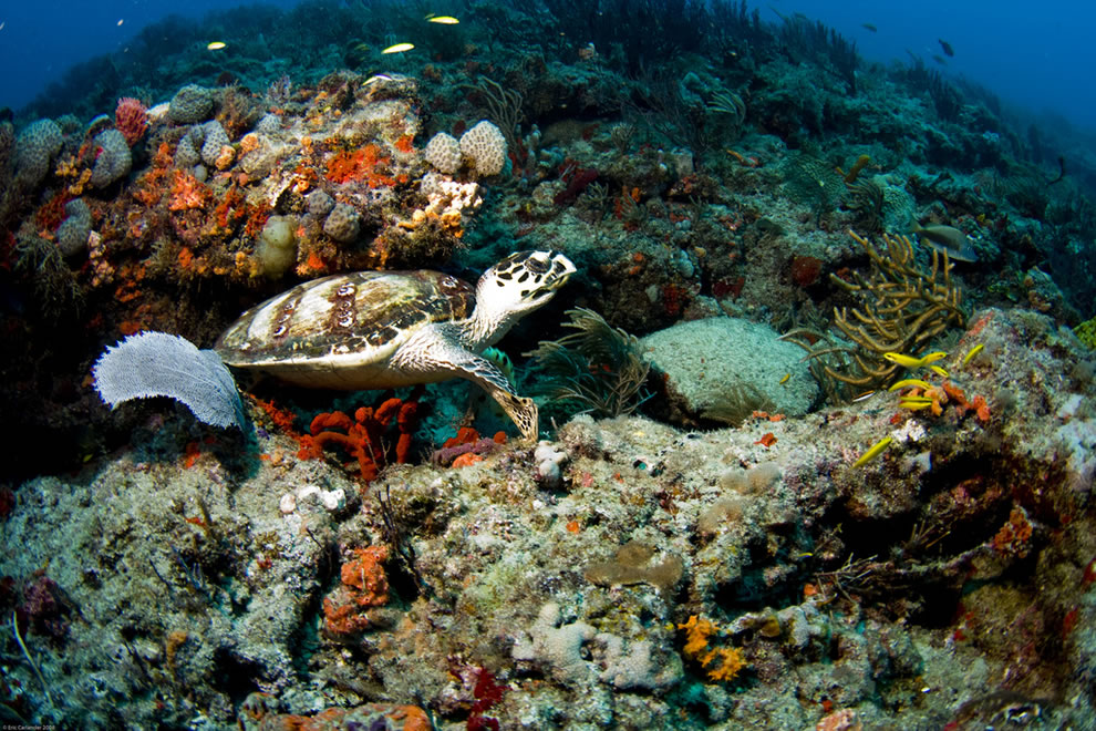 Diving the amazing underwater world of Dry Tortugas