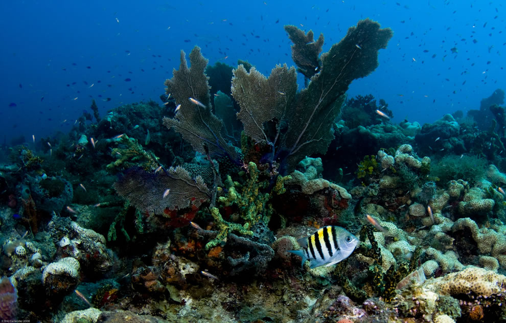 underwater biodiversity