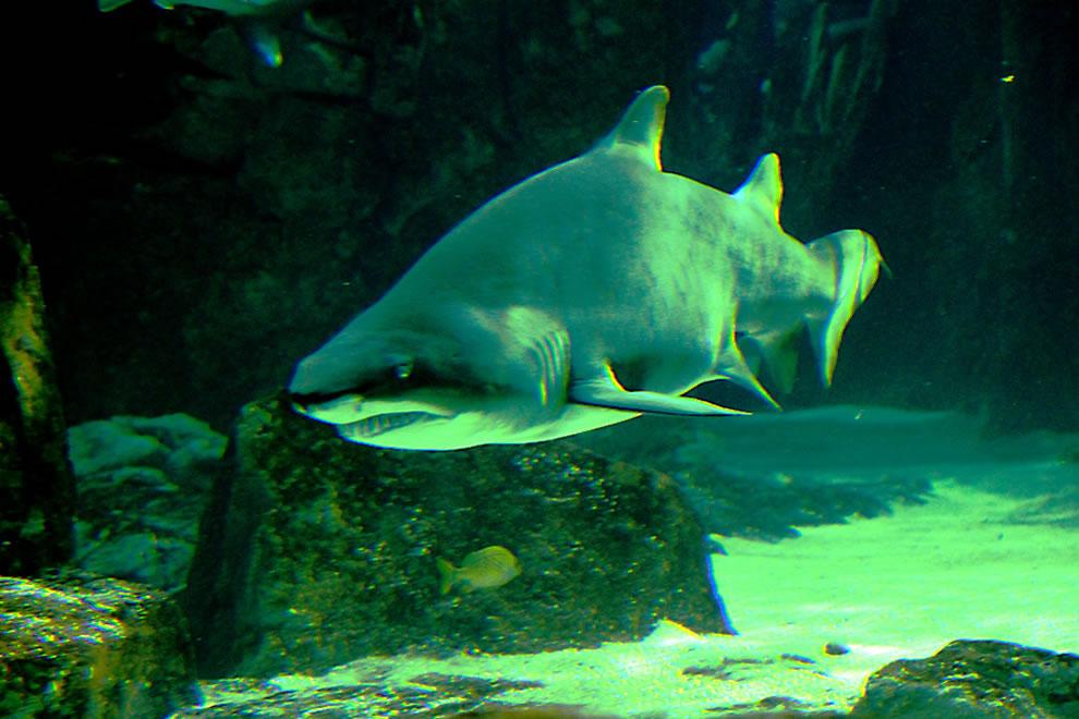 Istanbul Akvarium . . . The other day around the corner . . . SHARK!