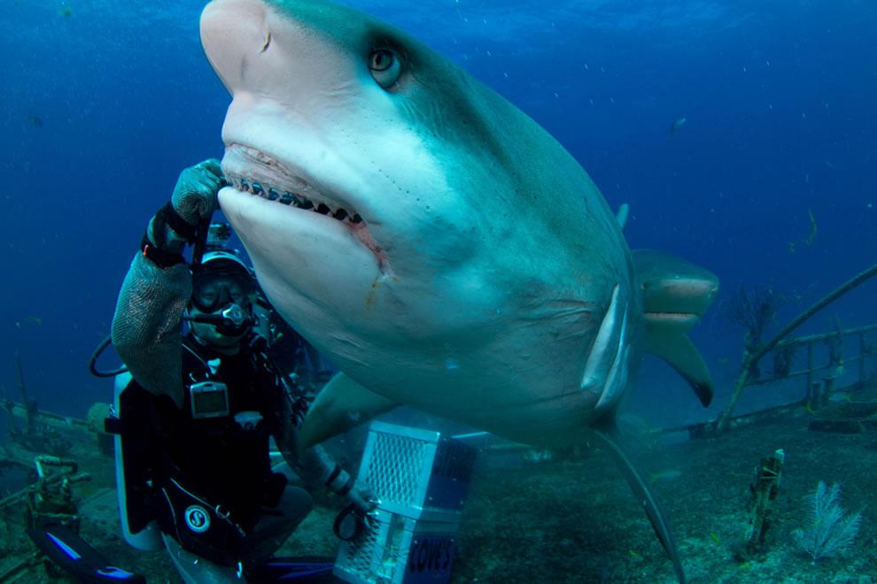 Joi feeding Carribean reef shark