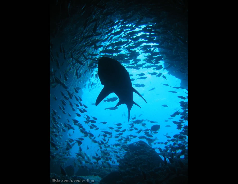 Silhouette of a Grey Nurse Shark in the mouth of a cave