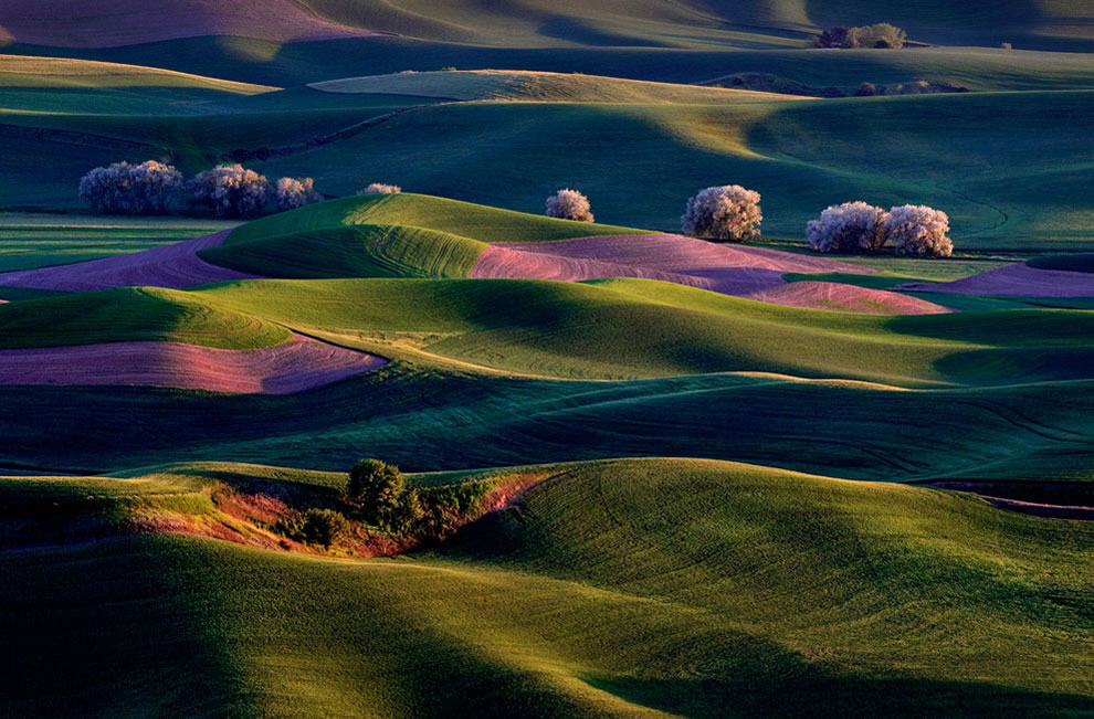 Sunrise on Palouse Hills