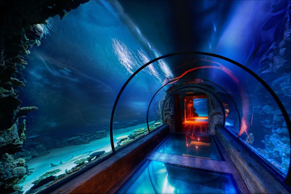 The Secret Underwater Passage for sharks