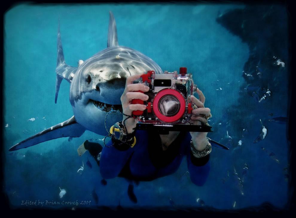 Watch out for that shark! Shark week photographers