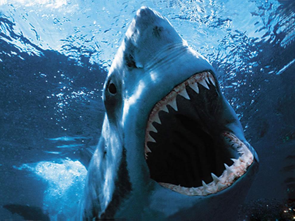 Predators Prowling The Sea Scary Or