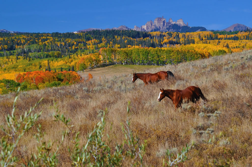 Freedom during the fall, horses roaming in colorful Colorado