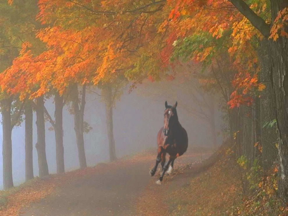 Spooked horse galloping through foggy fall forest