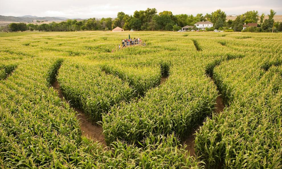 corn maze pumpkin fest