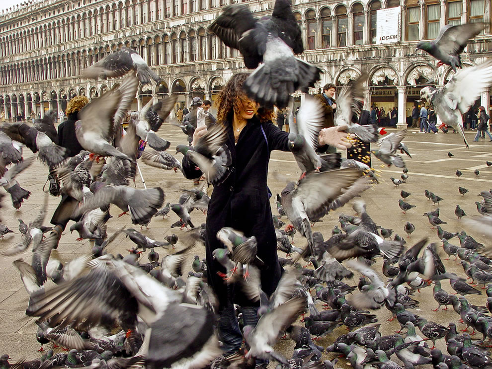 Attacked by Birds in St Mark's square in Venice