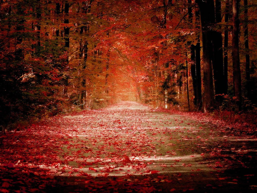 Crimson red foliage and road in autumn