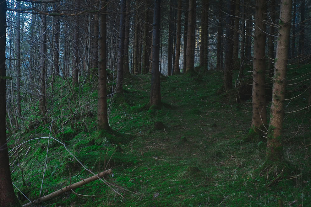 Dark Woods in Switzerland, the wolves were here